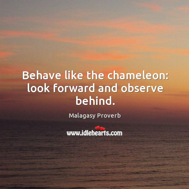 Behave like the chameleon: look forward and observe behind. Malagasy Proverbs Image