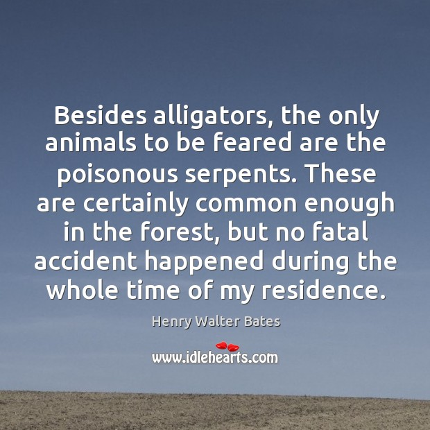 Besides alligators, the only animals to be feared are the poisonous serpents. Image