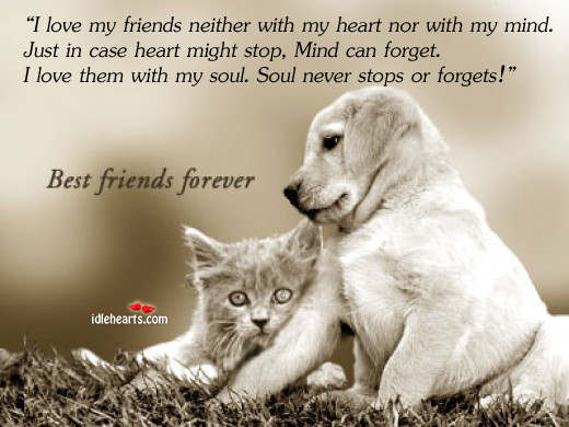 I Love My Friends Neither With My Heart Nor With My…, Forget, Friend, Friends, Friendship, Heart, Love, Mind, Never, Soul, Stop