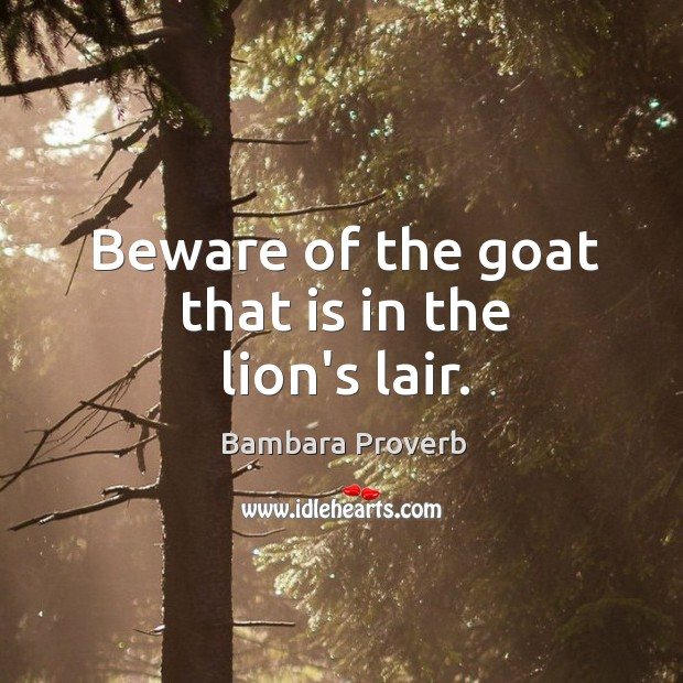 Beware of the goat that is in the lion's lair. Bambara Proverbs Image