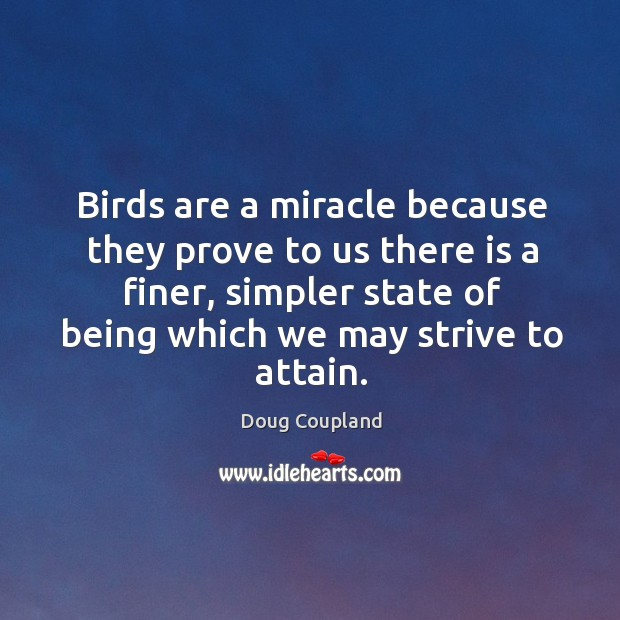 Birds are a miracle because they prove to us there is a finer, simpler state of being which we may strive to attain. Image