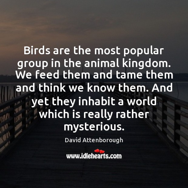 Image, Birds are the most popular group in the animal kingdom. We feed