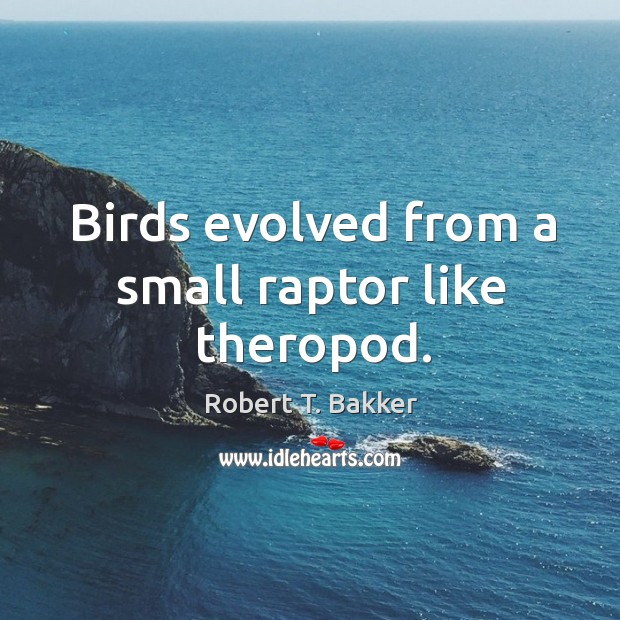 Birds evolved from a small raptor like theropod. Image