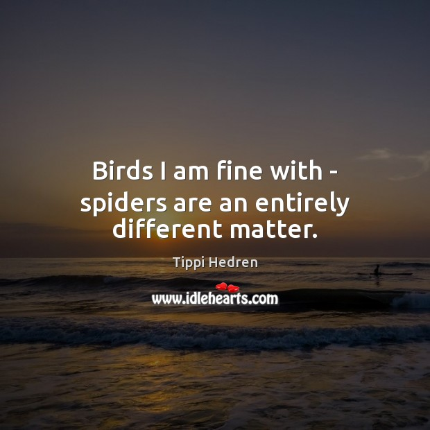 Birds I am fine with – spiders are an entirely different matter. Image