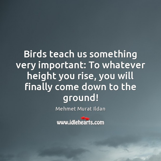 Image, Birds teach us something very important: To whatever height you rise, you