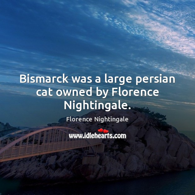 Bismarck was a large persian cat owned by Florence Nightingale. Florence Nightingale Picture Quote