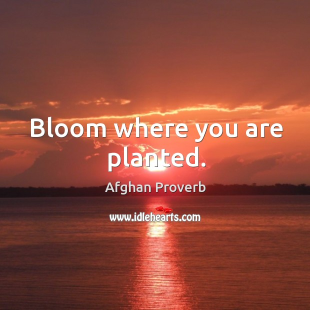 Bloom where you are planted. Afghan Proverbs Image