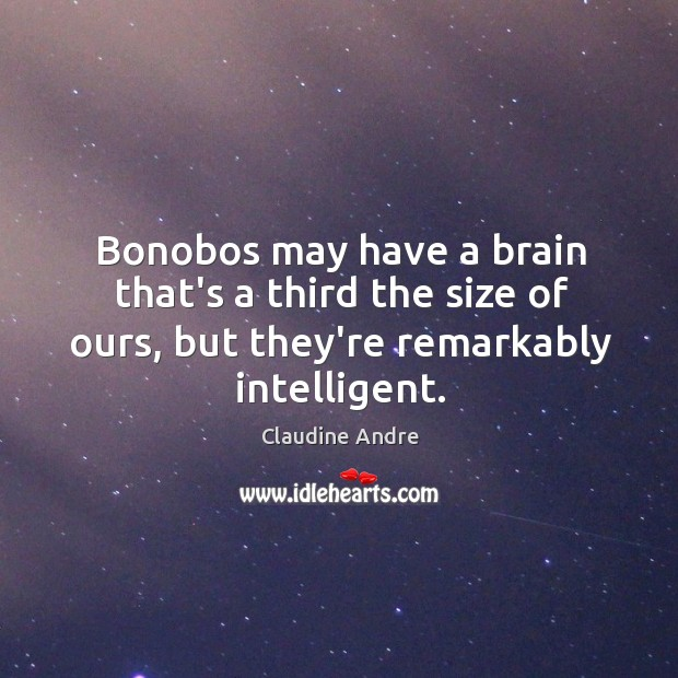 Image, Bonobos may have a brain that's a third the size of ours,