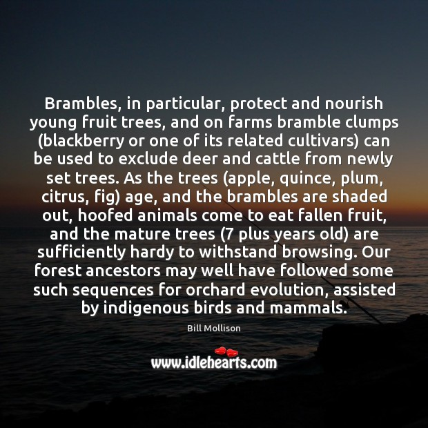 Brambles, in particular, protect and nourish young fruit trees, and on farms Bill Mollison Picture Quote