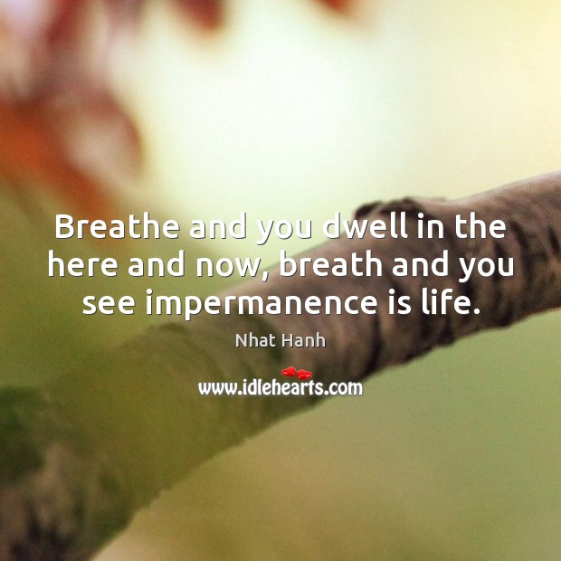 Breathe and you dwell in the here and now, breath and you see impermanence is life. Nhat Hanh Picture Quote