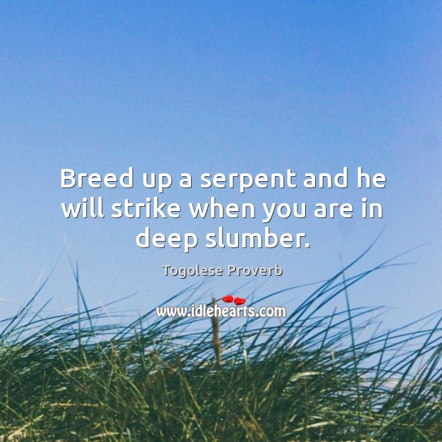 Breed up a serpent and he will strike when you are in deep slumber. Togolese Proverbs Image