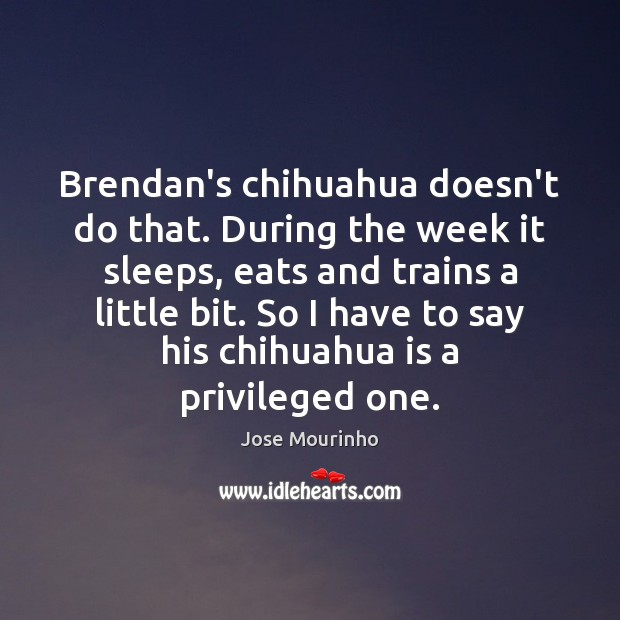 Jose Mourinho Picture Quote image saying: Brendan's chihuahua doesn't do that. During the week it sleeps, eats and