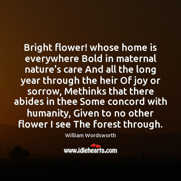 Bright flower! whose home is everywhere Bold in maternal nature's care And William Wordsworth Picture Quote