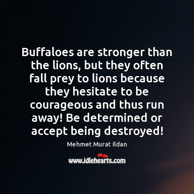 Image, Buffaloes are stronger than the lions, but they often fall prey to