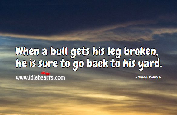When a bull gets his leg broken, he is sure to go back to his yard. Swahili Proverbs Image