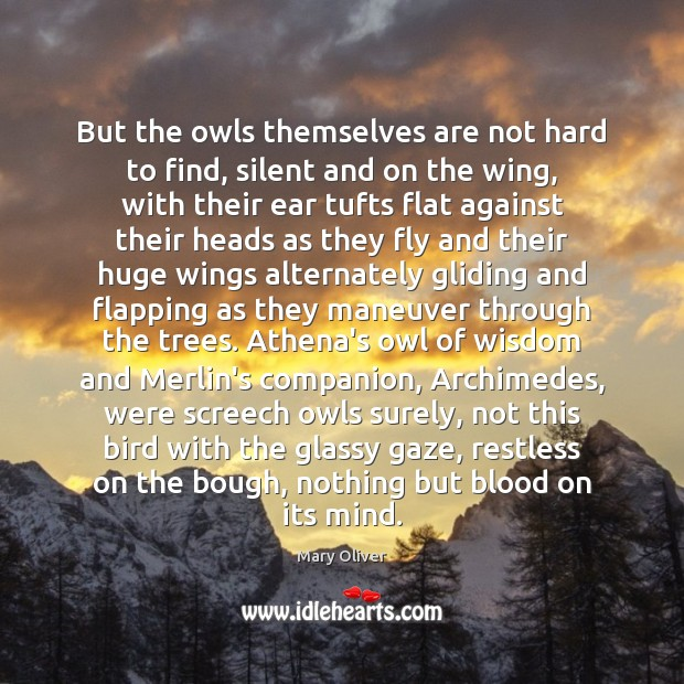 But the owls themselves are not hard to find, silent and on Mary Oliver Picture Quote