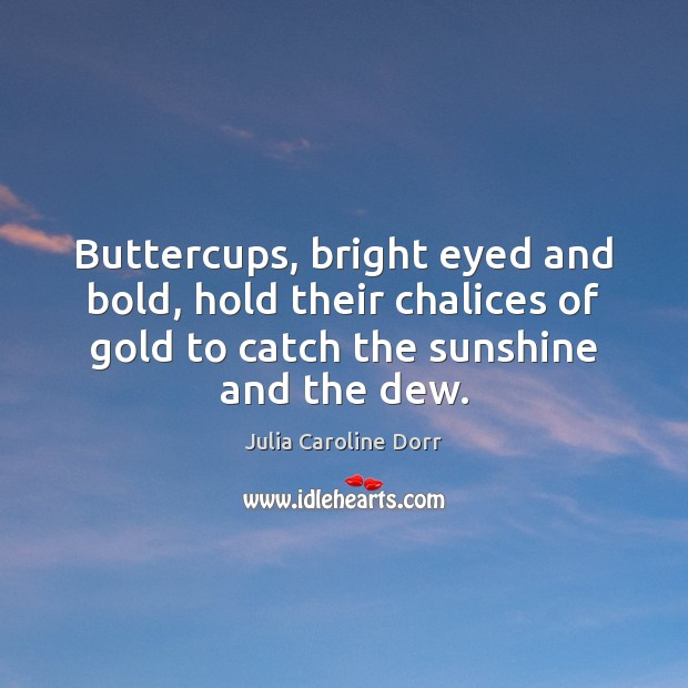 Buttercups, bright eyed and bold, hold their chalices of gold to catch Image