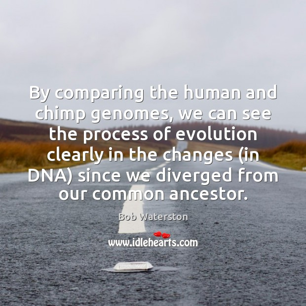 Image, By comparing the human and chimp genomes, we can see the process