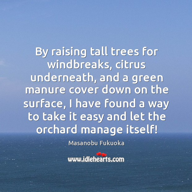 By raising tall trees for windbreaks, citrus underneath, and a green manure Masanobu Fukuoka Picture Quote