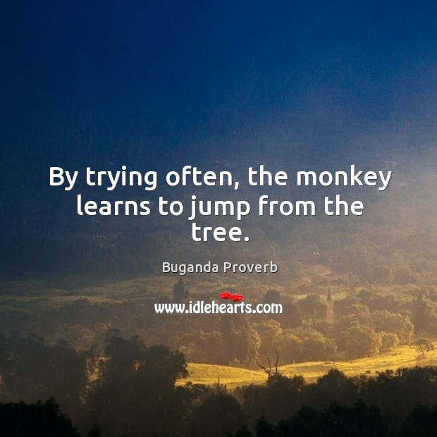 By trying often, the monkey learns to jump from the tree. Buganda Proverbs Image