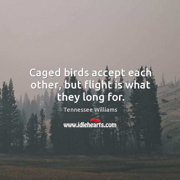 Caged birds accept each other, but flight is what they long for. Image
