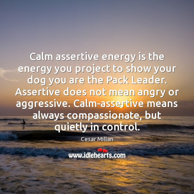 Calm assertive energy is the energy you project to show your dog Image