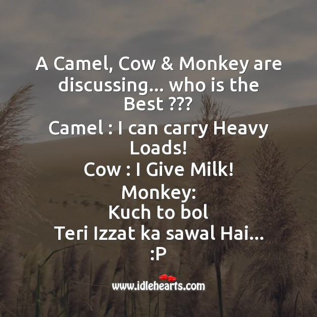 Camel, cow & monkey are discussing Funny Messages Image