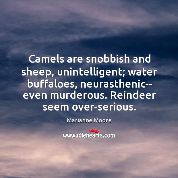 Camels are snobbish and sheep, unintelligent; water buffaloes, neurasthenic– even murderous. Reindeer Image