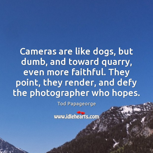Cameras are like dogs, but dumb, and toward quarry, even more faithful. Image