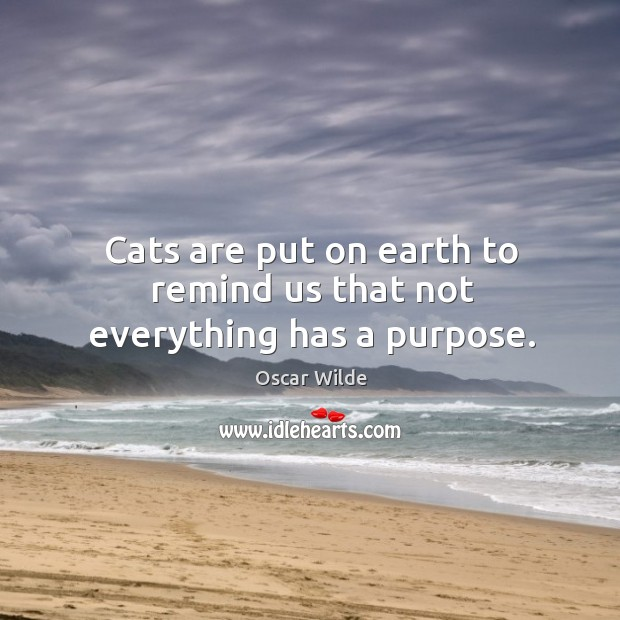 Image, Cats are put on earth to remind us that not everything has a purpose.