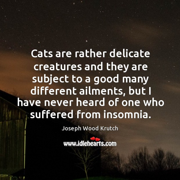 Cats are rather delicate creatures and they are subject to a good many different ailments Image
