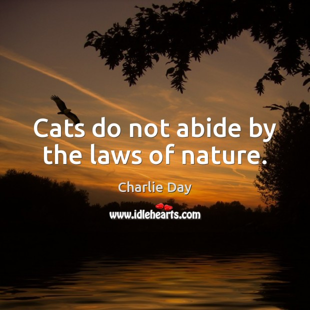 Image, Cats do not abide by the laws of nature.