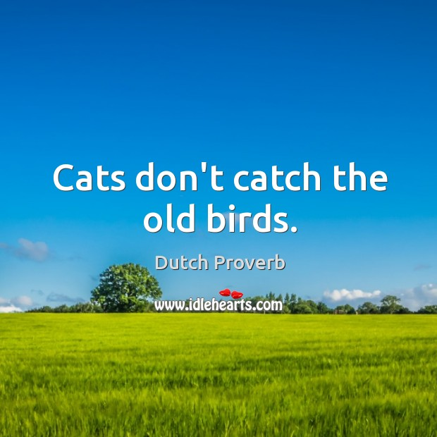 Cats don't catch the old birds. Dutch Proverbs Image