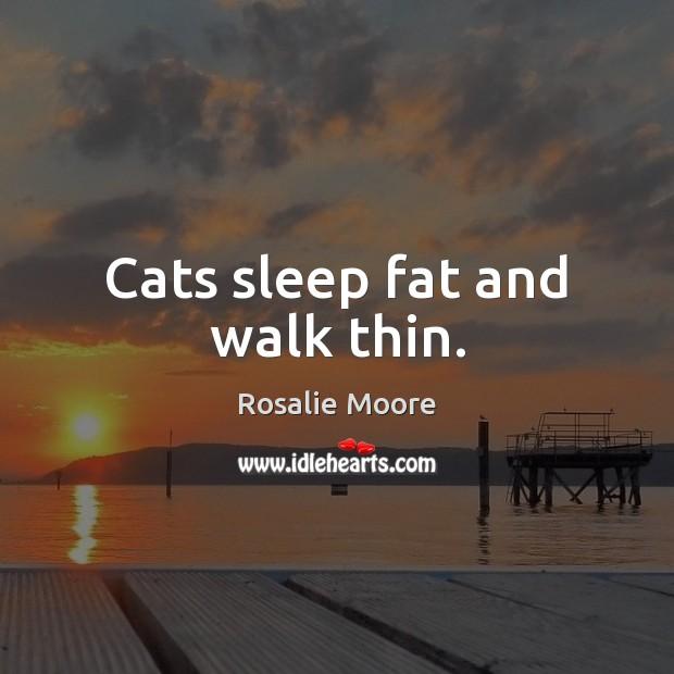 Cats sleep fat and walk thin. Image