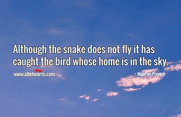 Although the snake does not fly it has caught the bird whose home is in the sky. Nigerian Proverbs Image