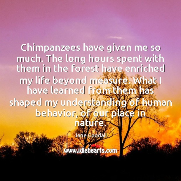 Chimpanzees have given me so much. The long hours spent with them Image