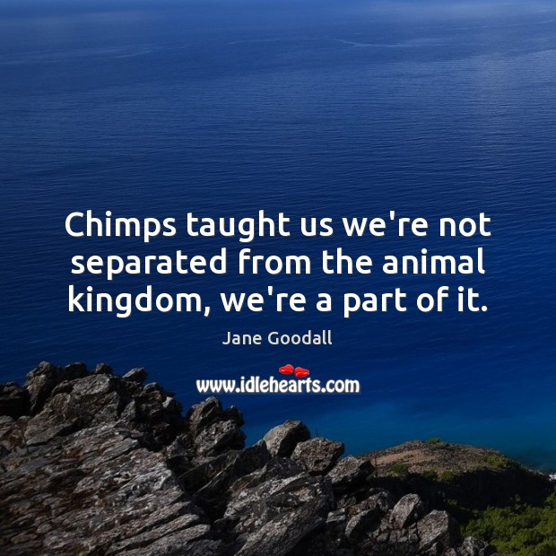 Chimps taught us we're not separated from the animal kingdom, we're a part of it. Jane Goodall Picture Quote