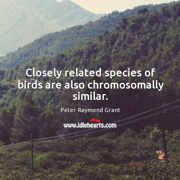 Image, Closely related species of birds are also chromosomally similar.