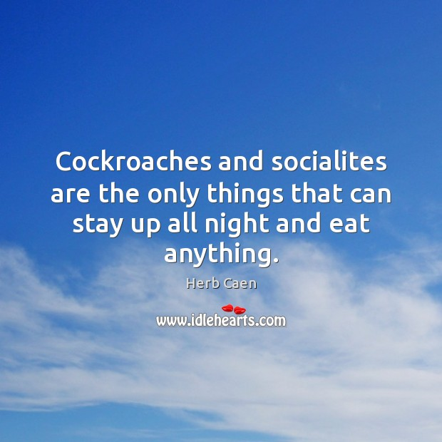 Image, Cockroaches and socialites are the only things that can stay up all