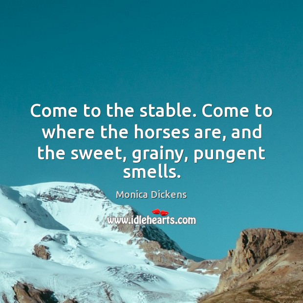 Come to the stable. Come to where the horses are, and the sweet, grainy, pungent smells. Image