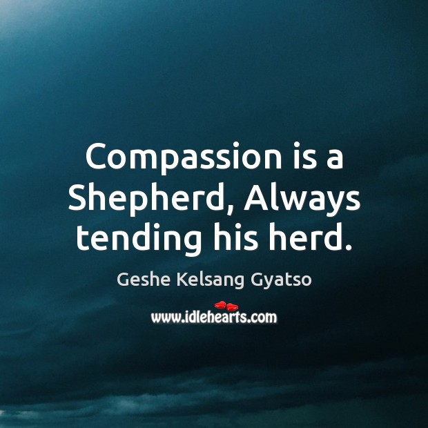 Compassion is a Shepherd, Always tending his herd. Geshe Kelsang Gyatso Picture Quote