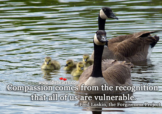Compassion comes from the recognition Image