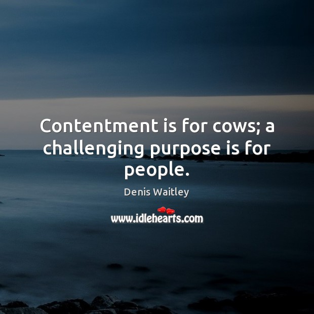 Image, Contentment is for cows; a challenging purpose is for people.