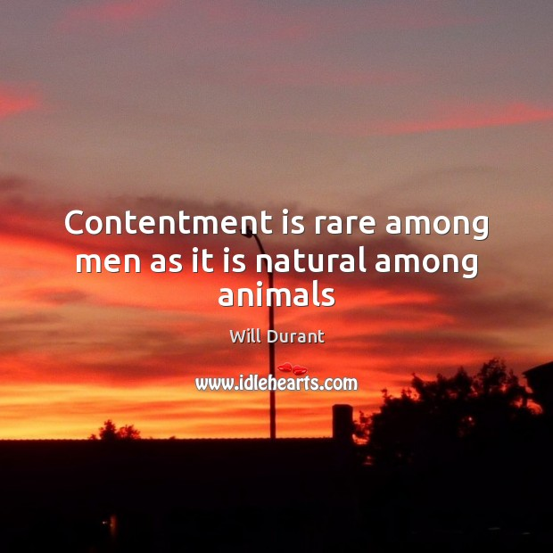 Contentment is rare among men as it is natural among animals Will Durant Picture Quote