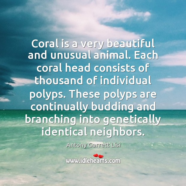 Image, Coral is a very beautiful and unusual animal. Each coral head consists
