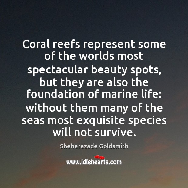 Coral reefs represent some of the worlds most spectacular beauty spots, but Image