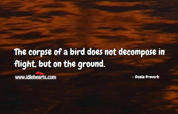 The corpse of a bird does not decompose in flight, but on the ground. Duala Proverbs Image