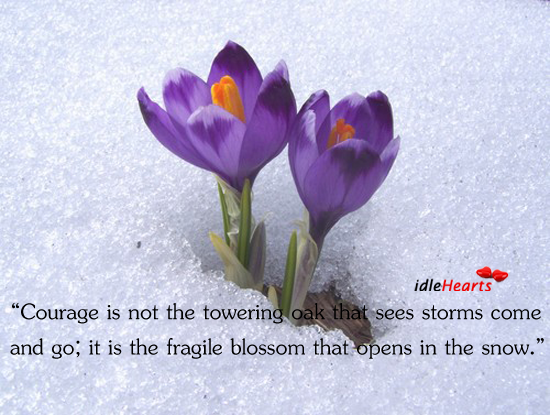 Courage Is Not The Towering Oak that Sees Storms Come And…