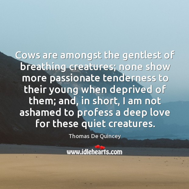 Cows are amongst the gentlest of breathing creatures; none show more passionate tenderness Image
