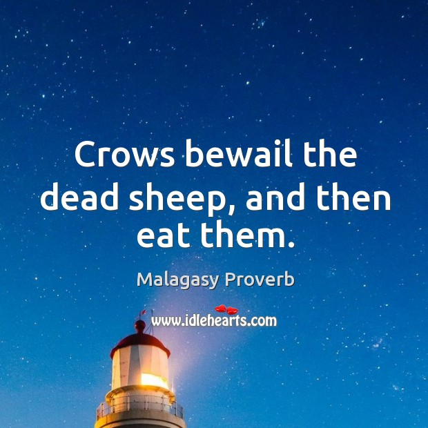 Crows bewail the dead sheep, and then eat them. Malagasy Proverbs Image